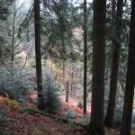 800px-Alsatian_mountain_forest_in_autumn